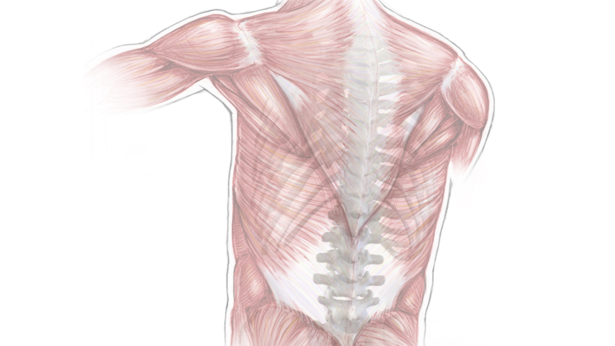 Minimally Invasive Spinal Surgery: At a Glance